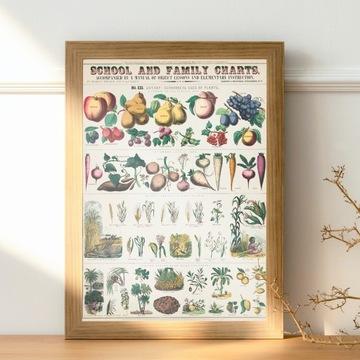 Plakat vintage owoce i warzywa tabela żywienia