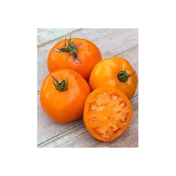 Pomidor POMARAŃCZOWY- sadzonki doniczkowe