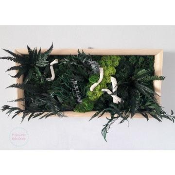 Obraz mech chrobotek rośliny stabilizowane paproć