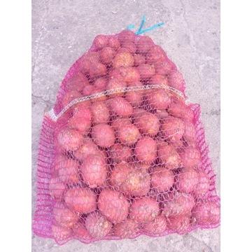 czerwone młode ziemniaki jadalne Red Sonia