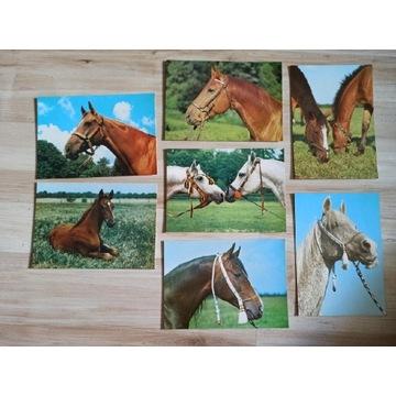 Zestaw pocztówki konie koń PRL zdjęcia koni 7 szt.