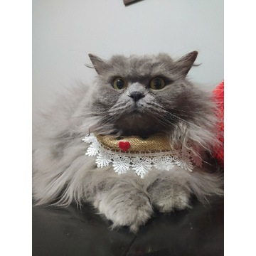 Obroża dla kota z koronki, ozdobna chusta, obroża