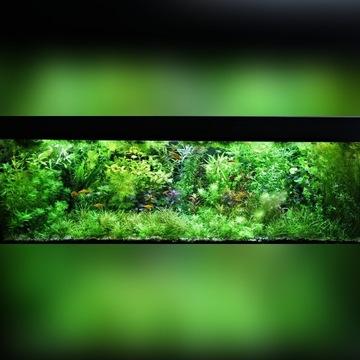 Piękne rośliny akwariowe - 30 gat - 1 zł za szt.