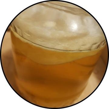 KOMBUCHA ~9 cm, starter + ulotki, grzyb herbaciany
