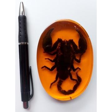 Skorpion w sztucznym bursztynie   ozdoba
