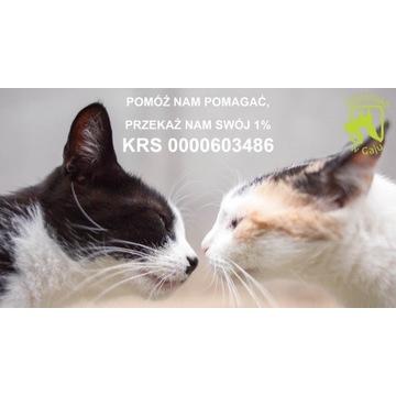 Pomóżmy kotom wolno żyjącym przetrwać zimę 2