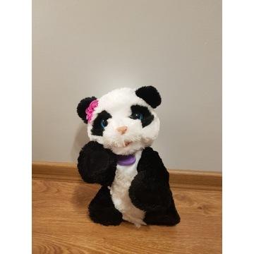 Panda która wydaje dźwięki i chodzi