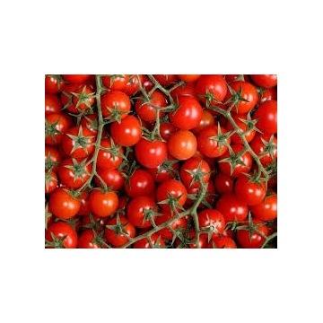 Sadzonka pomidora koktajlowego POKUSA