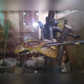 Terrarium dla węża, jaszczura, czy czego tam