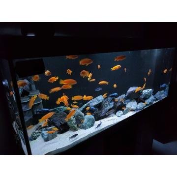 JUWEL RIO 450 Zestaw akwarium Helialux Spectrum, m