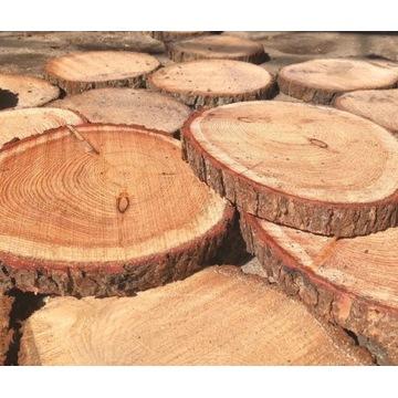 Plastry drewna krążki drewniane 20-25 cm MODRZEW