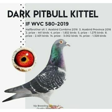 Para 100% Dirk Van de bulck Pitbull-Kittel,Rosita
