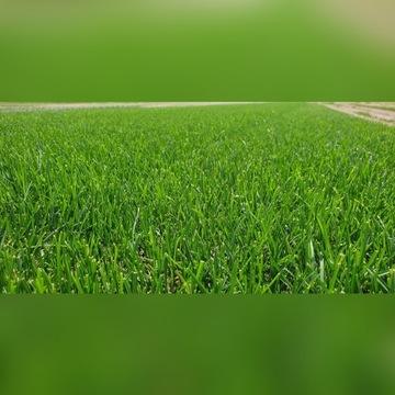 Trawa z rolki, trawa w rolce