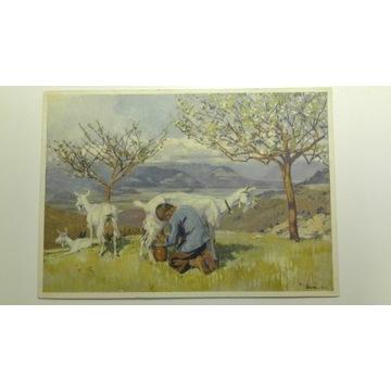 Białe kozy, dojarz, pocztówka 1928, Szwajcaria