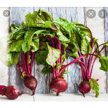 Buraki czerwone świeże Eco od rolnika rwane z pola