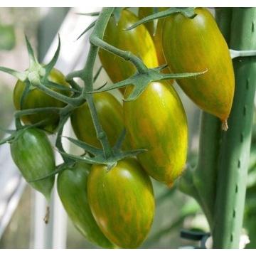 Pomidor Green Tiger nasiona