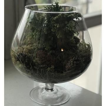 ŻYWA Roślina w szklanej doniczce