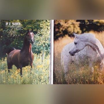 """ARABIAN HORSE WORLD"" nr 5/2001, konie arabskie"