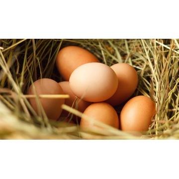 Jajka wiejskie 10 szt