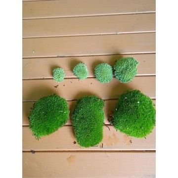 Mech żywy nieperforowany kulki zielone.