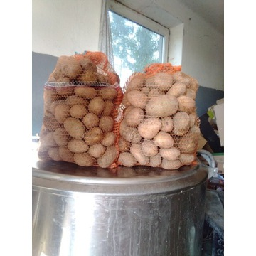Ziemniak tajfun 15 kg najlepsza jakość