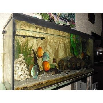 Akwarium - profesjonalny zestaw 300 l Ryby paletki
