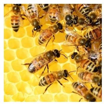 Trzy odkłady,matki,rodziny pszczele