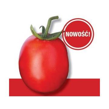 Pomidor Dyno