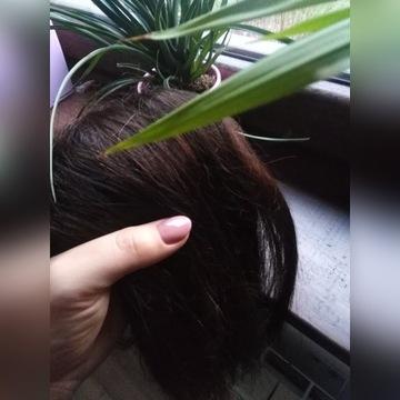 Zestaw naturalne pasma brąz średni  spinki clip