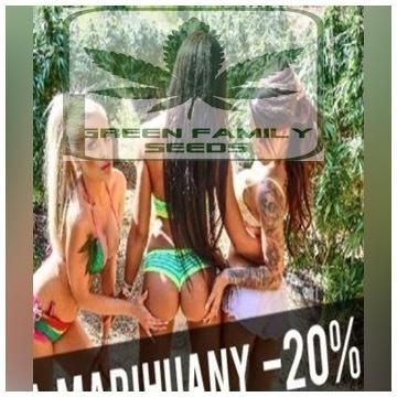 nasiona marihuany duża paka 14 sztuk
