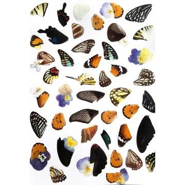 Naklejki z motylami  motyle
