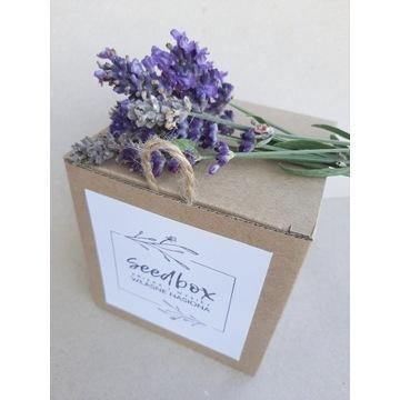 Seedbox kompletne pudełko do przechowywania nasion