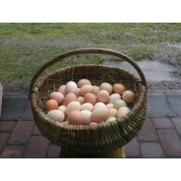 Jajka ekologiczne 1 sztuka = 30 jajek