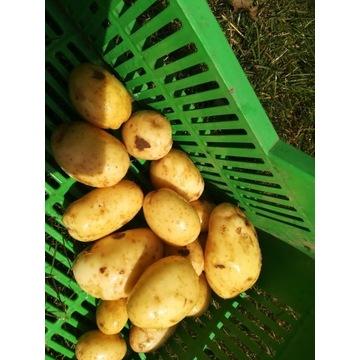 młody eko ziemniak 5 kg