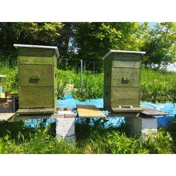 Odkłady, rodziny pszczele