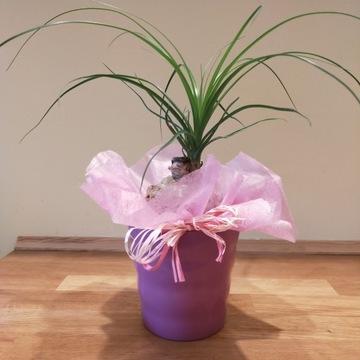 Kwiaty doniczkowe w ceramicznych osłonkach
