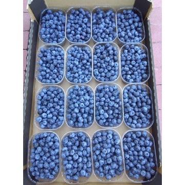 BORÓWKA Amerykańska Owoce 250g 7zł Tel 699:094:550