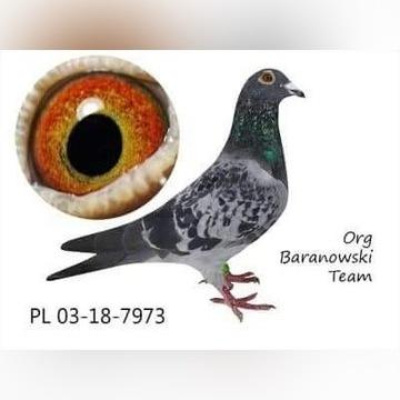 Org. Baranowska