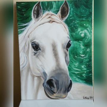 Portret koń nowy obraz