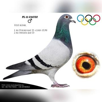 Gołębie Młode 2020r.