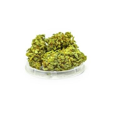 CBD Kwiaty Konopi Gorilla Glue 5g susz 4,7%