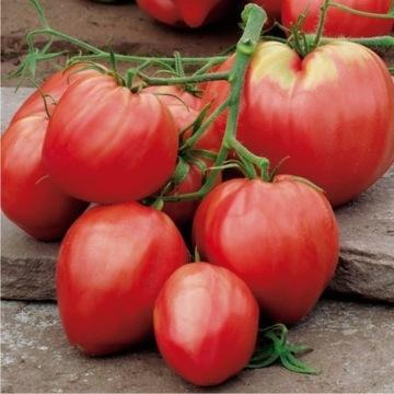 Pomidor Bawole Serce sadzonki XXL