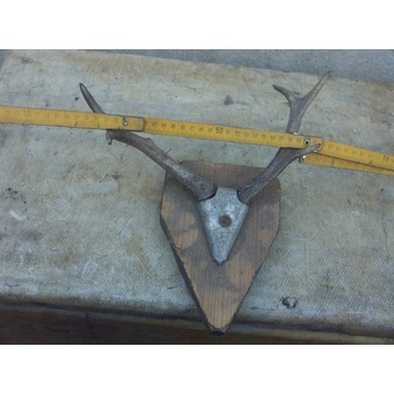 poroże jelenia z PRLu