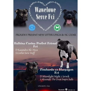 Staffordshire bull terrier (staffik, stafik)