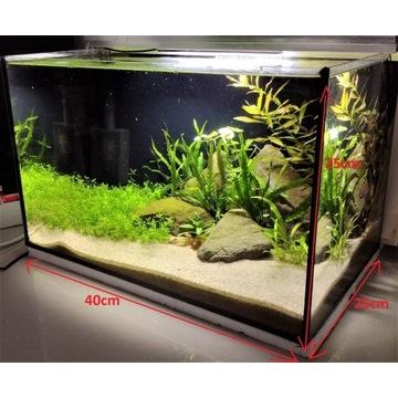 Kompletne akwarium 25l + nowy filtr + żywe rośliny