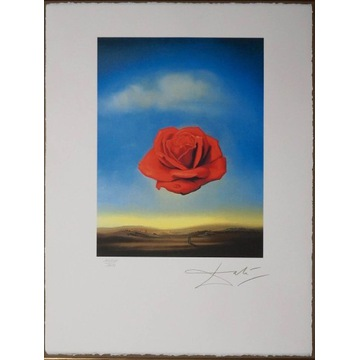 Salvador Dali - Meditative rose 50x65