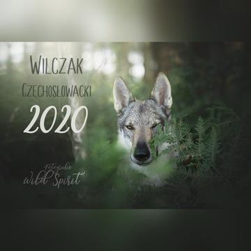 Kalendarz 2020 Wilk Wilczak Czechosłowacki A3