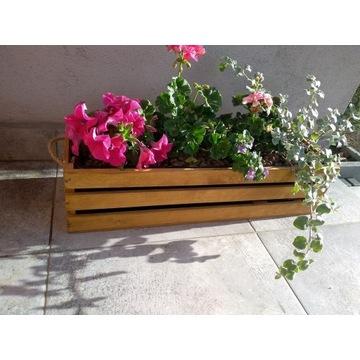 petunia, pelargonia, kocanką i bakopa w skrzynce