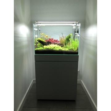 Akwarium roślinne - zestaw