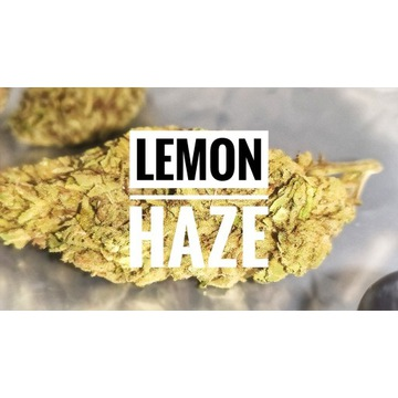 Cytrusowy Lemon Haze CBD 15% susz konopny 25g